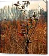 Autumn Grass6277 Canvas Print