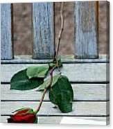 Valentine Rose. Canvas Print