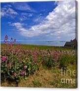 Valerian By A Stone Wall On The Northumberland Coast Canvas Print