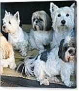 Van Doggies Canvas Print