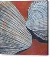 Van Hyning's Cockle Shells Canvas Print