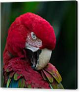 Vanity-close Up Of A Green Winged Macaw Canvas Print