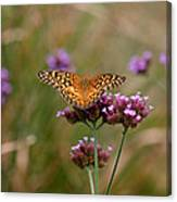 Variegated Fritillary Butterfly In Field Canvas Print