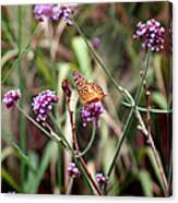 Variegated Fritillary Butterfly Canvas Print