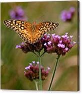 Variegated Fritillary Butterfly Square Canvas Print