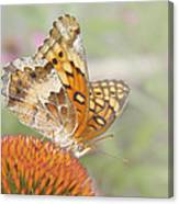 Variegated Fritillary On Cone Flower Canvas Print