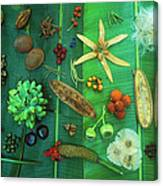 Variety Of Seeds And Fruits Canvas Print