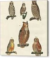 Various Kinds Of Owls Canvas Print