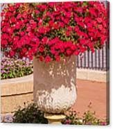 Vase Of Petunias Canvas Print