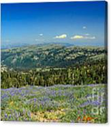 Vast View And Lupine Canvas Print