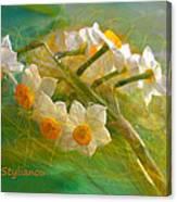 Veil On  Narcissus Canvas Print