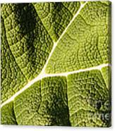 Veins Of A Leaf Canvas Print