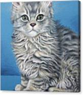 Velvet Kitten Canvas Print