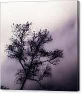 Velvet Mist Canvas Print