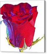 Velvet Rose Bud 2 Canvas Print