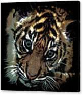 Velvet Tiger Cub Canvas Print