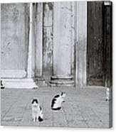Cats Of Venice Canvas Print