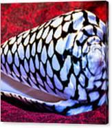 Venomous Conus Shell Canvas Print