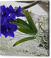 Vera The Vanda Canvas Print
