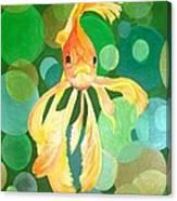 Vermilion Goldfish Canvas Print