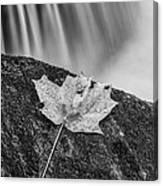 Vermont Autumn Maple Leaf Black And White Canvas Print
