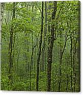 Vermont Mount Mansfield Green Forest Fog Panorama Canvas Print