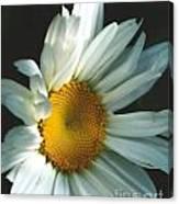 Vertical Daisy Canvas Print