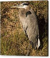 Vertical Heron Basking In The Morning Sun Canvas Print