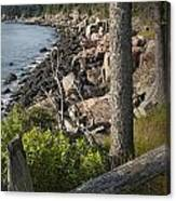 Vertical Photograph Of The Rocky Shore In Acadia National Park Canvas Print