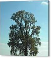 Vertical Tree Canvas Print