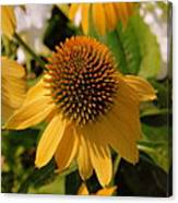 Vertical Yellow Flowers Canvas Print