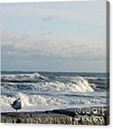 Seagull In Winter Canvas Print