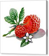 Artz Vitamins A Very Happy Raspberry Canvas Print