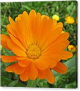 Very Lovely Orange Bloom Canvas Print