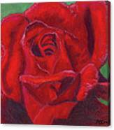 Very Red Rose Canvas Print