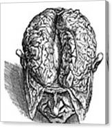 Vesalius: Brain, 1543 Canvas Print