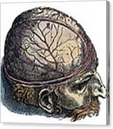 Vesalius: Cranium Canvas Print