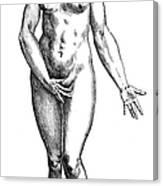 Vesalius: Female Nude Canvas Print