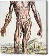 Vesalius: Muscles 01 Canvas Print