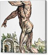 Vesalius: Muscles 02, 1543 Canvas Print