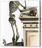 Vesalius: Skeleton, 1543 Canvas Print