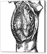 Vesalius: Thoracic Cavity Canvas Print