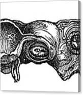 Vesalius: Uterus, 1543 Canvas Print