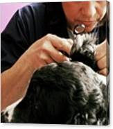 Vet Examining A Dog Canvas Print