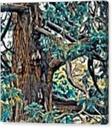 V.i. 0123 Canvas Print