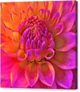Vibrant Dahlia Flower Canvas Print