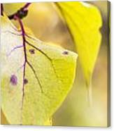 Vibrant Leaves Canvas Print