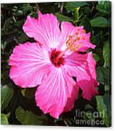 Vibrant Pink Hibiscus Canvas Print