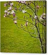 Vibrant Pink Magnolia Blossoms Canvas Print