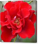 Vibrantly Red Rose Canvas Print